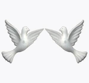 2 Tauben, weiß, 40x35