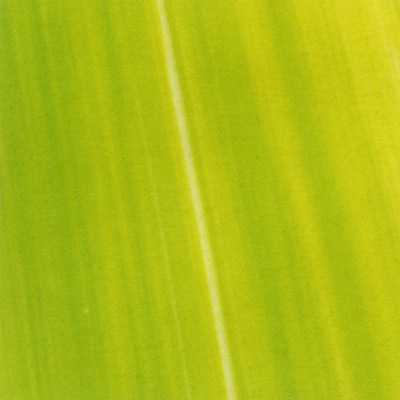 Verzierwachsplatte, Nr. 0929, Bemalt, 200 x 100 x 0,5 mm