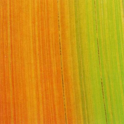 Verzierwachsplatte, Nr. 1001, Bemalt auf g/s, 200 x 100 x 0,5 mm